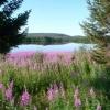 la natura finlandese